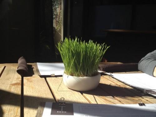 potted grass, charleston interior design ideas